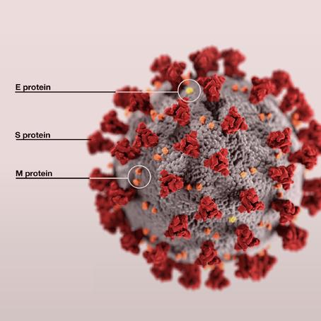 ที่มาของสีแดงบนไวรัส Covid-19