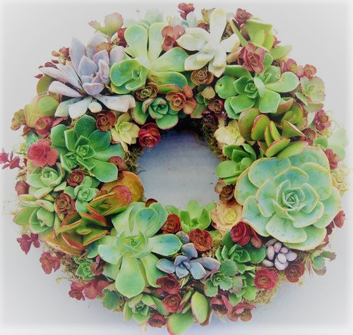 Growing wreath of Succulents