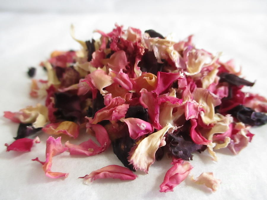 Dried carnation petals