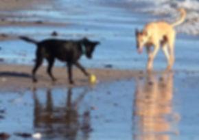 Alnwick dog walker, woof alnwick