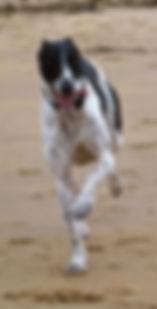 dog walker, woof alnwick