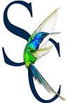 SCOPERTA CREATIONS COMPANY LOGO