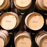 stina-winery-bol-barrels.jpg