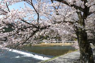 아라시야마(嵐山)