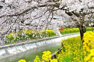 야마시나(山科)의 비와코소수이(琵琶湖疏水)