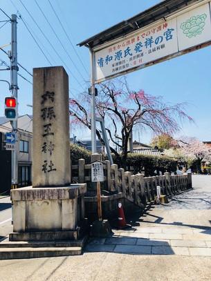 로쿠손노우(六孫王)신사의 벚꽃