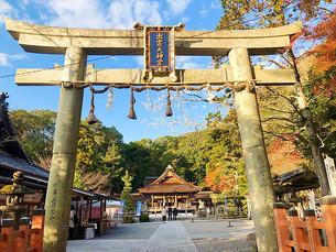 카메오카(亀岡) 이즈모 다이진구(出雲大神宮)의 단풍