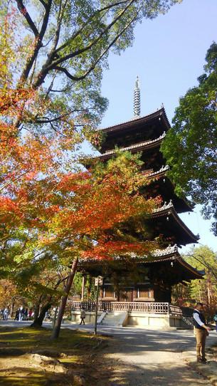 닌나지(仁和寺)의 오층탑과 단풍