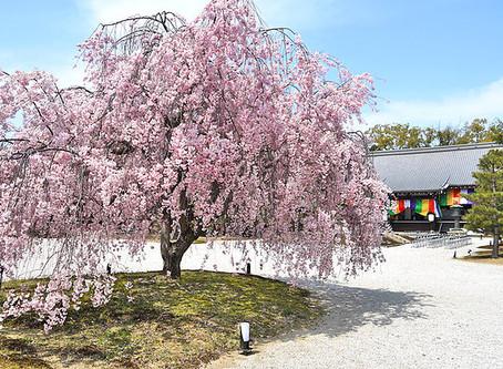 다이카쿠지(大覚寺)