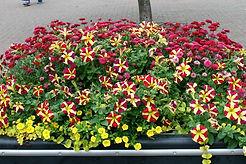 Flowers crop.jpg