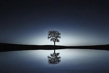 tree-736881.jpg