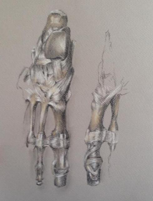 Anatomical Foot Study
