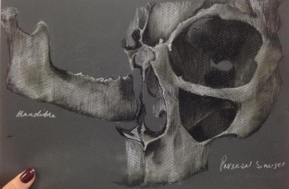 Anatomical Sketch No.7