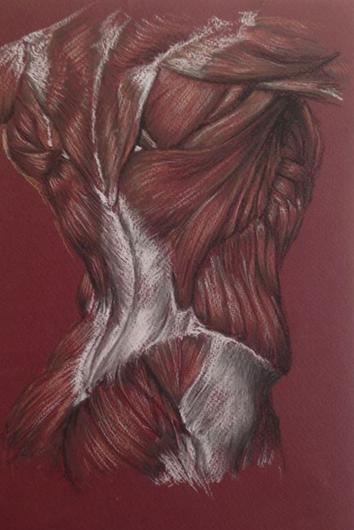 Anatomical Back Study