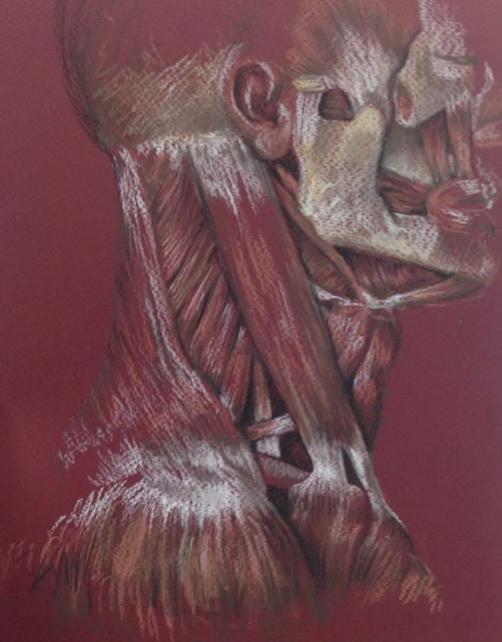 Anatomical Neck Study