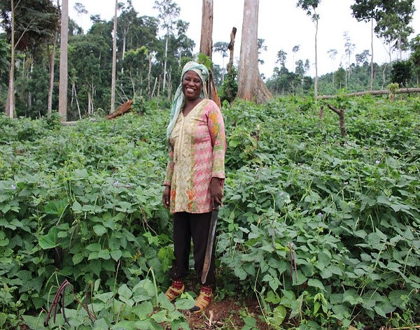 Local women working in the cowpea taungy
