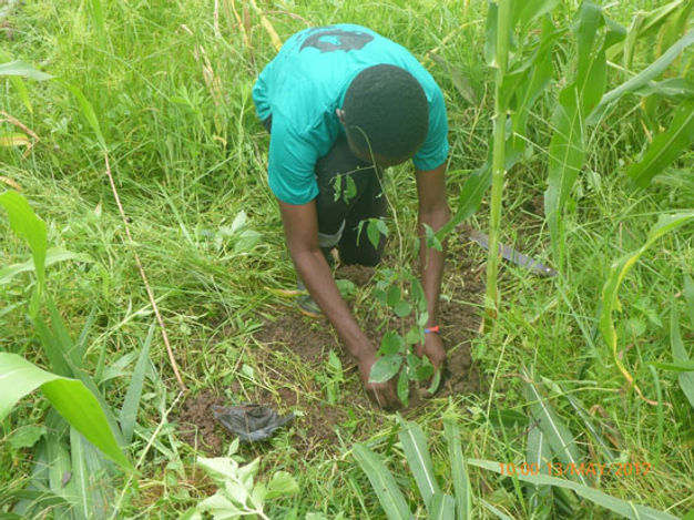 knust-chapter-member-planting-a-tree-.jp
