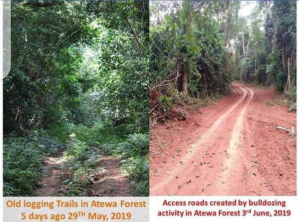 Access road created in Atewa to make way