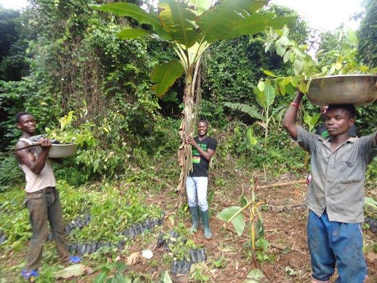 2014-Squeaker-Frog-Seedlings-Community-m