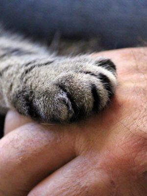 CBD Oil For Cats Suffering Feline Senile Dementia