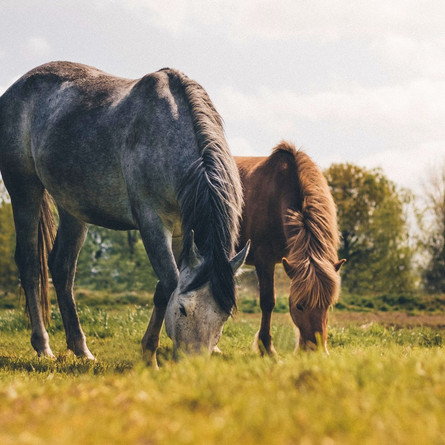 CBD Oil For Horses: 3 Most Frequently Asked Questions Answered