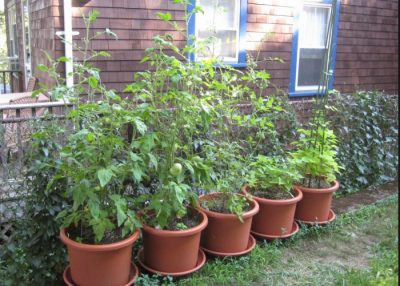 4 All Natural Pest Control Remedies For Your Garden
