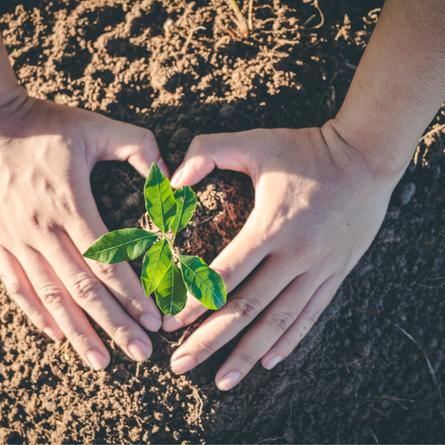 New Program Launches to Plant 2 Billion Trees