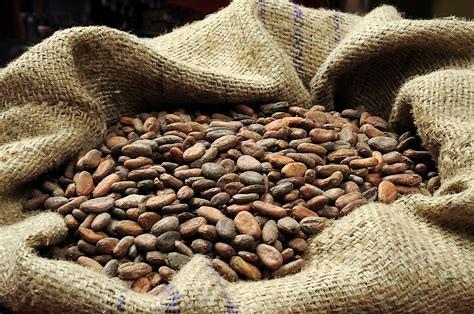 Cocoa Bean in Berlap Bag