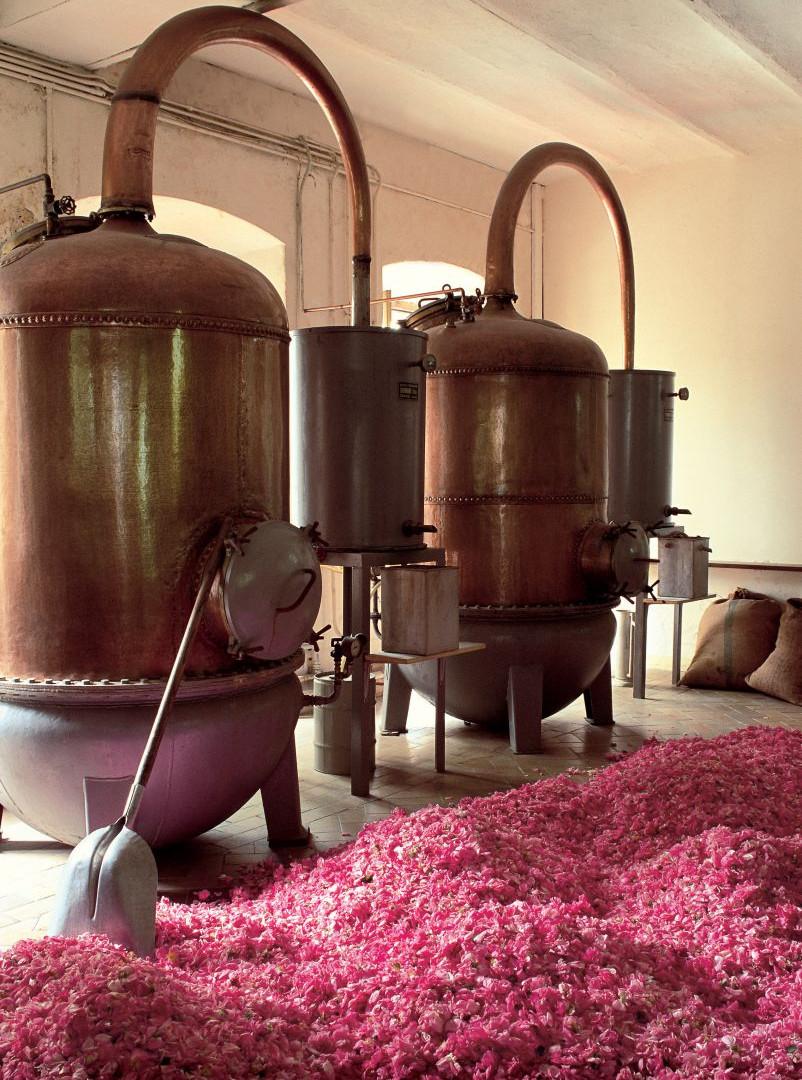 Distillation of Rose