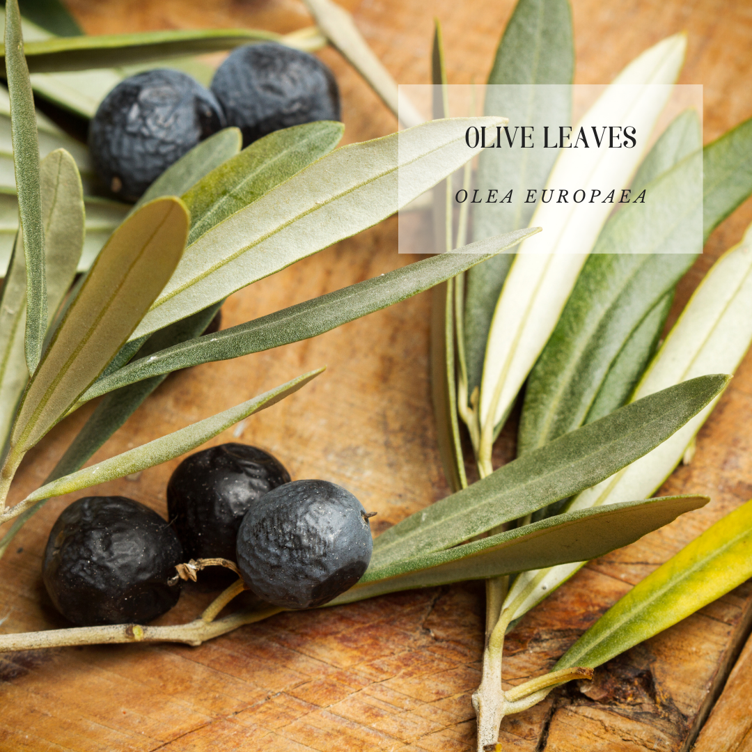 Olive leaves.png