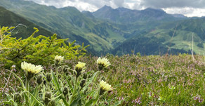 Hirschstein, Navistal - 2.281 m