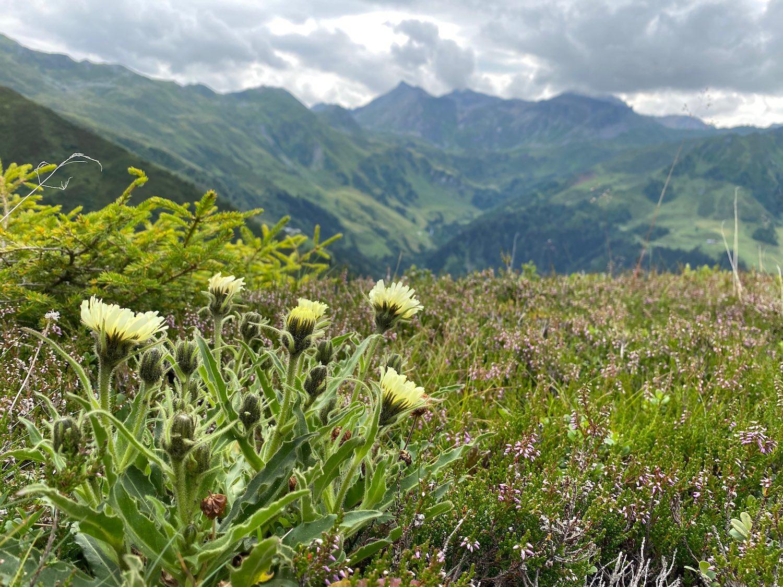 Am Weg zur Seapn Alm, Navistal Tirol