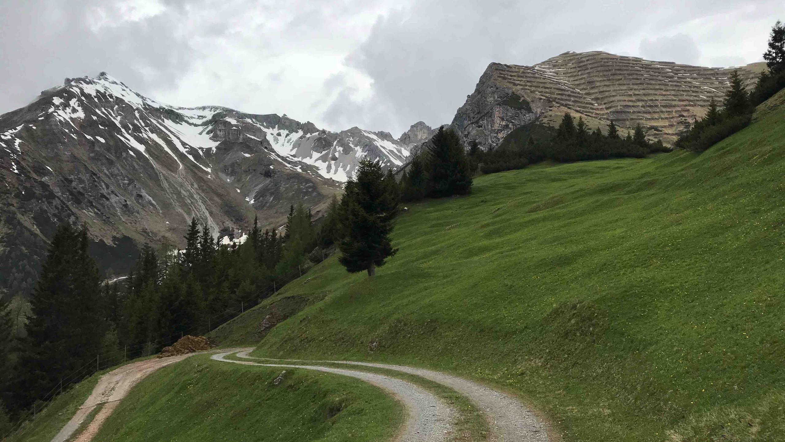 Forstweg ueber satte gruene Wiesen, Biketour Gschnitztal