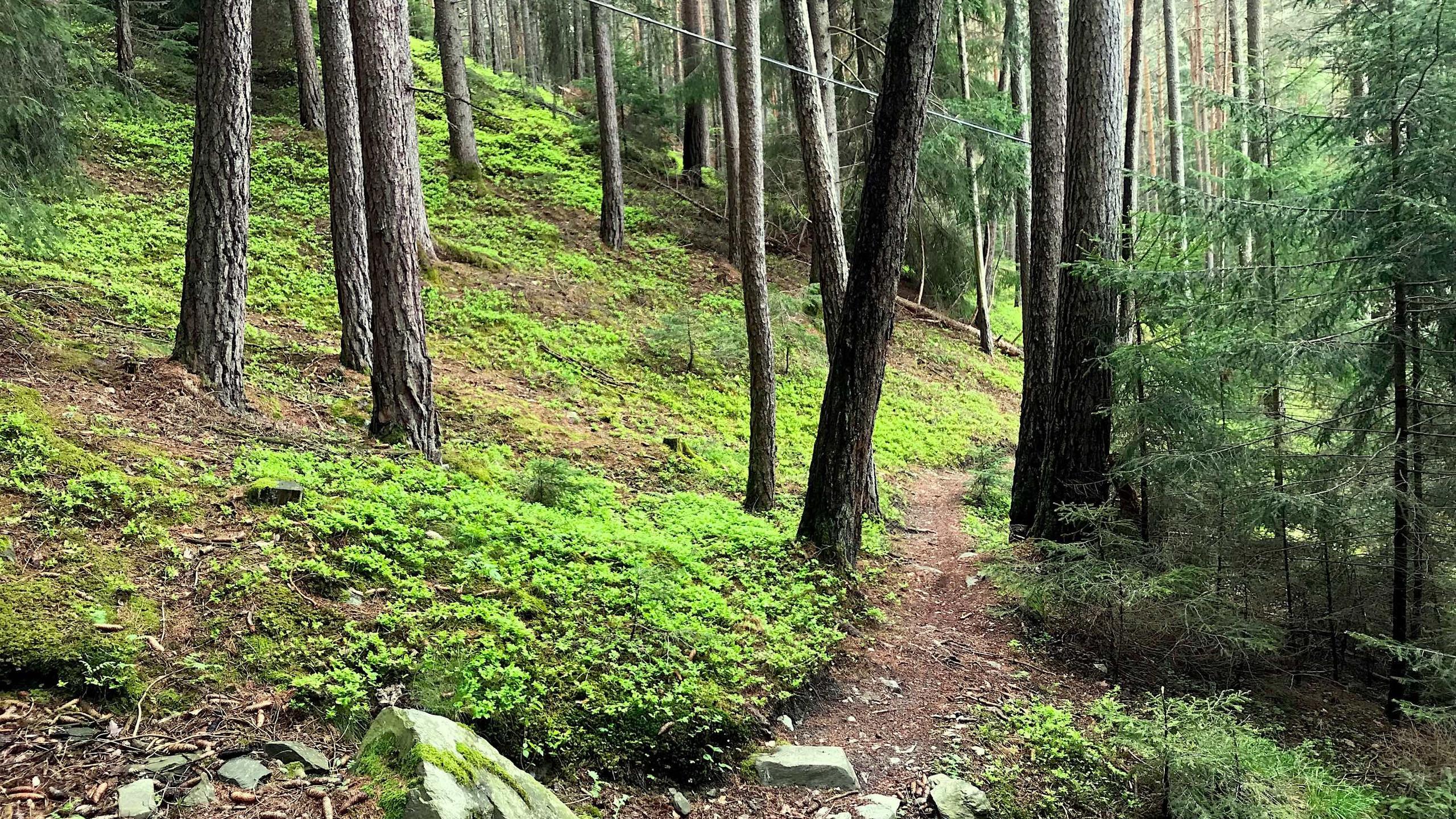 Trail aufwaerts durch den Wald, Biketour Plose