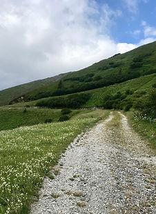 Forstweg Mountainbiketour Brenner Grenzkamm, Tirol