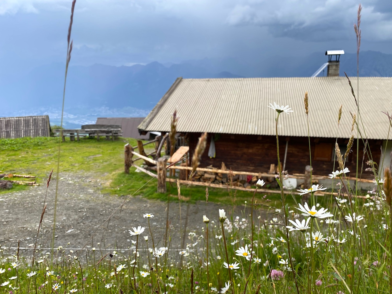 Largozalm und Blumen, Bergtour Largoz, Tirol