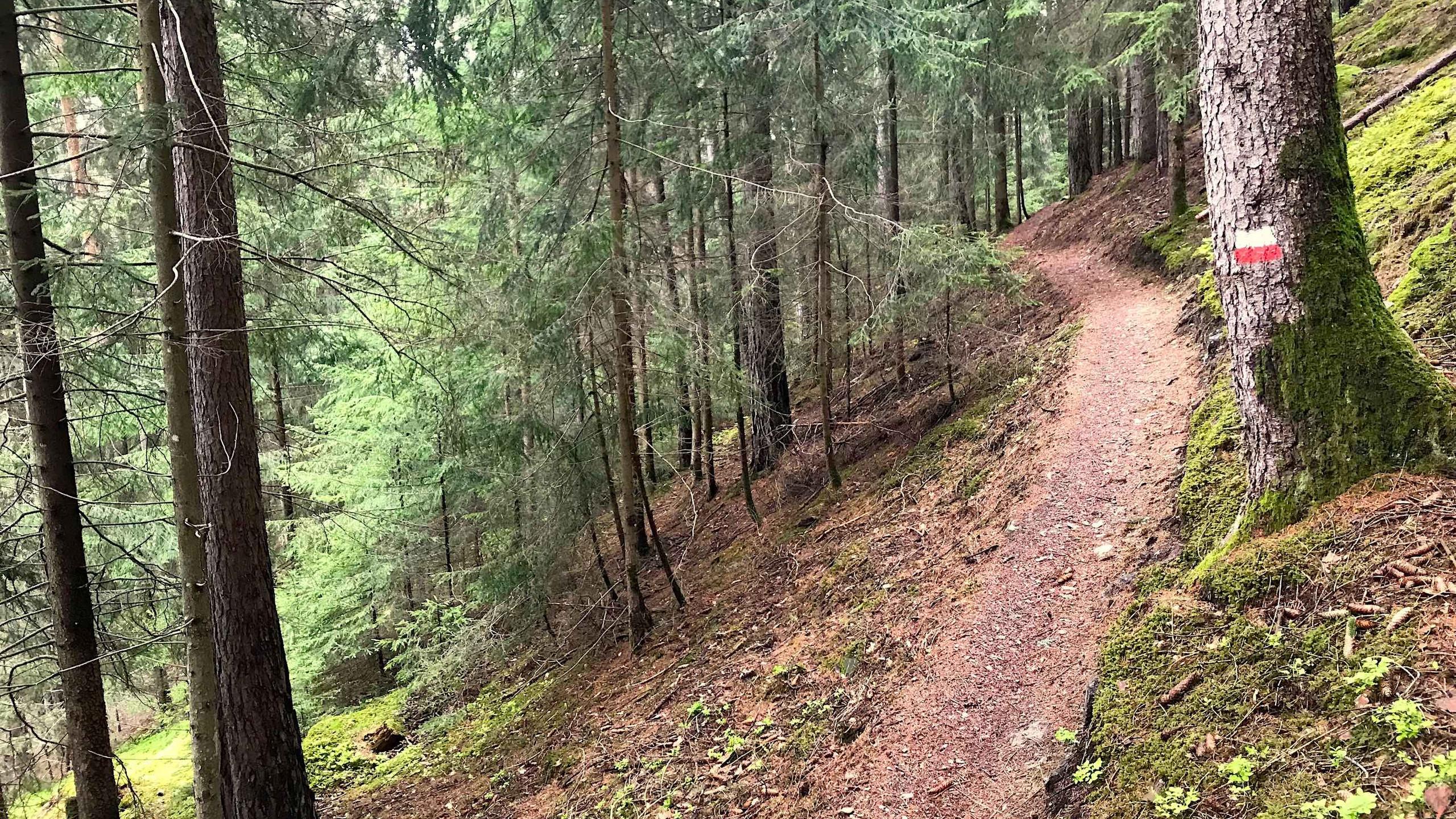 Trail aufwärts durch den Wald, Biketour Plose