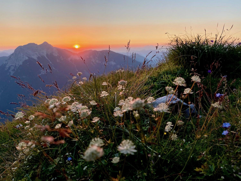 Sonnenaufgang Blumen, Achensee Tirol