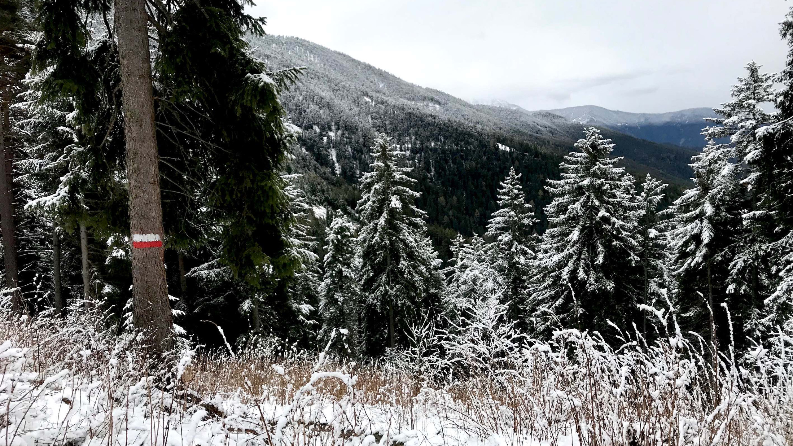 Start des Trails noch mit Schnee, Biketour Plose