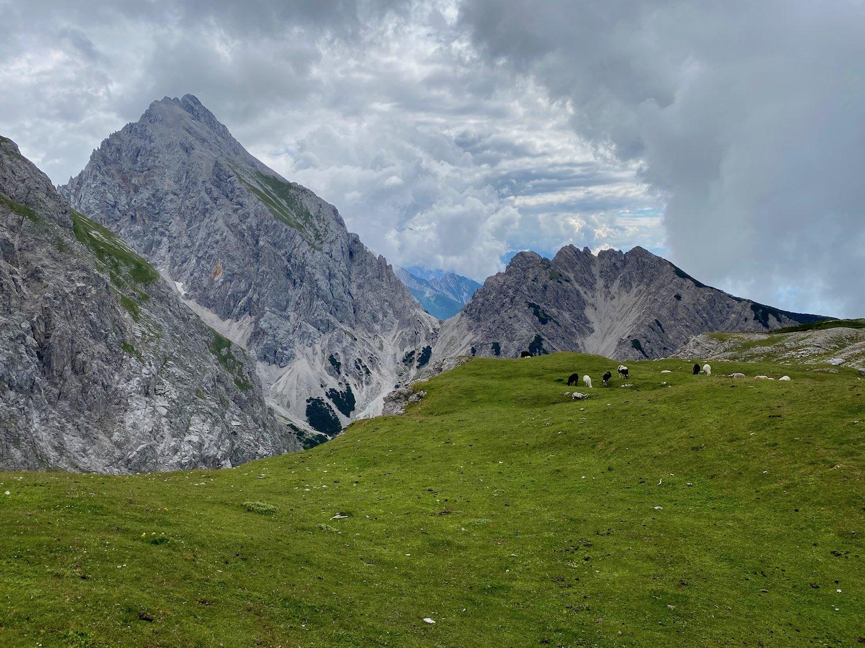 Schafherde am Gipfel, Bike & Hike Höllkopf, Tirol