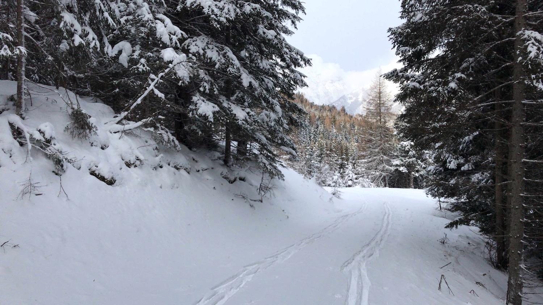 Tourenspur durch den Wald, Skitour Waldraster Joechl