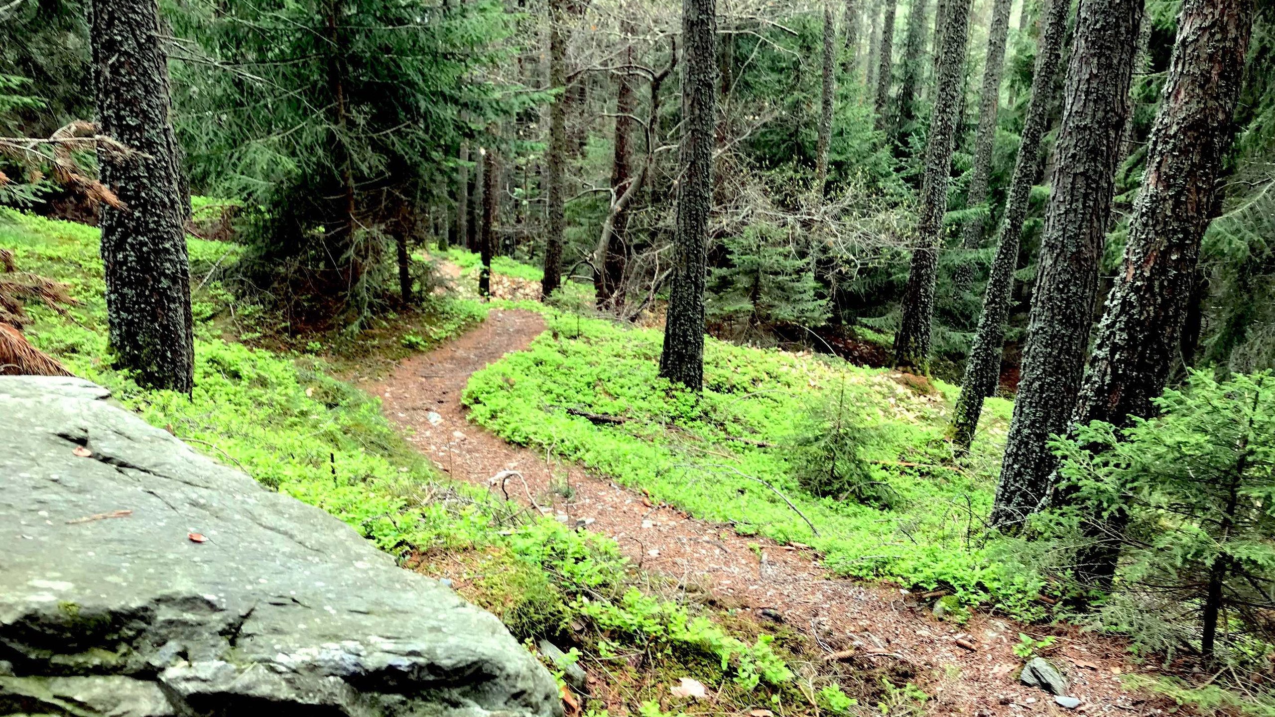 Trail wieder im Gruenen, Biketour Plose