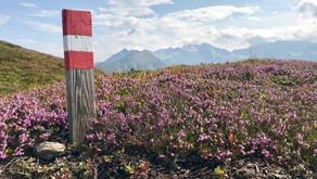 Padauner Kogel, Wipptal - Bike & Hike - 2.066 m