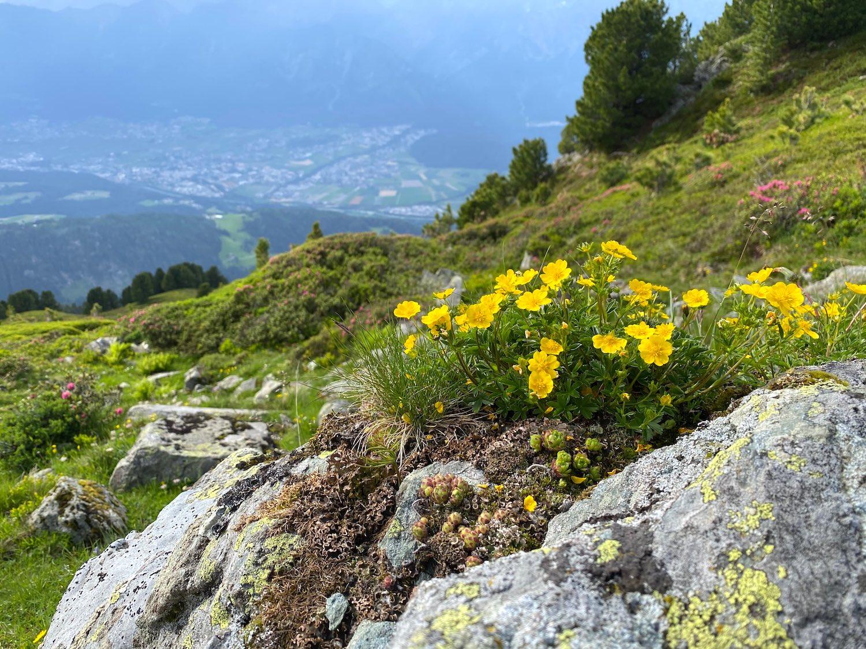 Inntal-Blick mit Blumen, Bergtour Largoz, Tirol