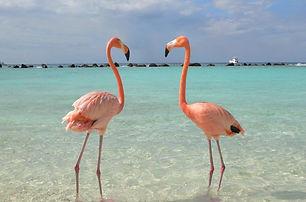 flamingos_by_whoknows61-1024x818-1-1024x