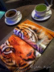 Tiger of India-8548.jpg