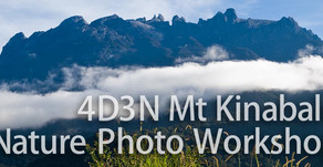 4 Day 3 Night Borneo-Mount Kinabalu Nature Photography Workshop