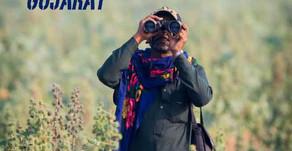 Bird Watching, Bird photography in Kutch, Gujarat, India