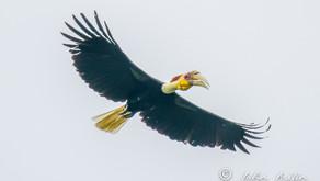 Birding Khao Yai National Park Thailand