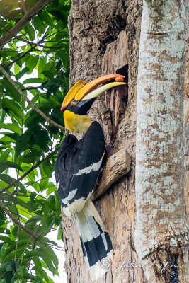 birds of Khao Yai-7727